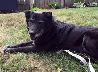 68c8d2d01c43c5 Forever Fosters--Sponsor a Senior Dog